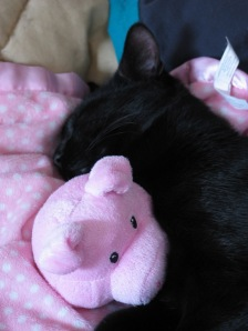 Teazyka, sleeping with his wubbie